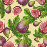 Seamless pattern of hand drawn figs Royalty Free Stock Photo