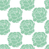Seamless pattern with hand drawn green cactus Stock Photography
