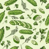 Seamless pattern of hand drawn green cucumbers and different herbs. Ink and colored sketch on light green background. stock illustration