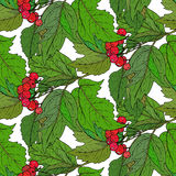 Seamless  pattern with hand drawn guelder rose branches Royalty Free Stock Image