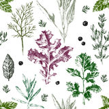 Seamless pattern with hand drawn herbs and spices. In color Royalty Free Stock Images
