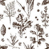 Seamless pattern with hand drawn herbs and spices Royalty Free Stock Image