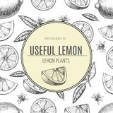 Seamless pattern hand drawn lime. Whole , sliced pieces half, leave sketch. Fruit engraved style illustration. Retro Royalty Free Stock Photography