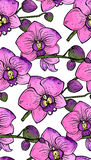 Seamless pattern with hand drawn orchid flowers Stock Image
