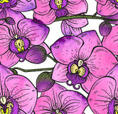 Seamless pattern with hand drawn orchid flowers with wstercolor Stock Photography
