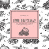 Seamless pattern Hand drawn sketch style pomegranates with seeds and leafs. Sketch style vector illustration. Organic Royalty Free Stock Image