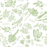 Seamless pattern with hand drawn spicy herbs. Culinary kitchen background with herbs. Perfectly look on kitchen textile, fabric. Royalty Free Stock Photos