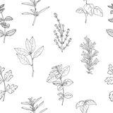 Seamless pattern with hand drawn spicy herbs. Monochrome kitchen background Royalty Free Stock Photos