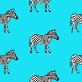 Seamless pattern with hand drawn zebra vector illustration. Royalty Free Stock Image