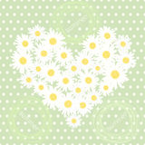 Seamless pattern with heart of camomiles Stock Photography
