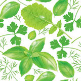 Seamless pattern herbs Stock Images