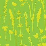 Seamless pattern with herbs and flowers Stock Photos