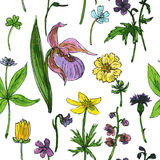 Seamless pattern with herbs and flowers. Vector seamless pattern with watercolor drawing herbs and wild flowers Stock Photos