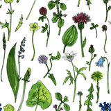 Seamless pattern with herbs and flowers Stock Images