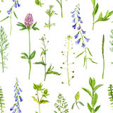 Seamless pattern with herbs and flowers Royalty Free Stock Images