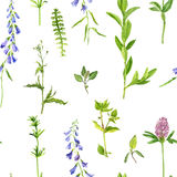 Seamless pattern with herbs and flowers Stock Photo