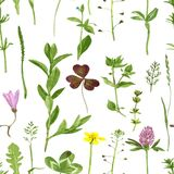 Seamless pattern with herbs and leaves. Vector seamless pattern with watercolor drawing wild flowers, herbs and leaves, background with painted  wild plants Royalty Free Stock Photos