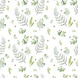 Seamless pattern with herbs royalty free illustration