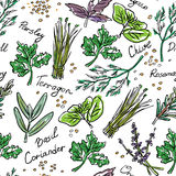 Seamless Pattern Herbs set, vector hand drawn illustration Stock Image