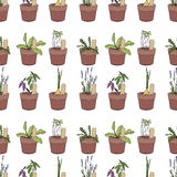 Seamless pattern with herbs and vegetables in Stock Photos