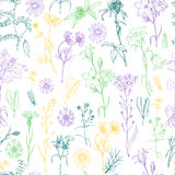 Seamless pattern with herbs and wild flowers. Vector illustration for your design Royalty Free Illustration
