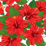 Seamless pattern of hibiscus Royalty Free Stock Photography