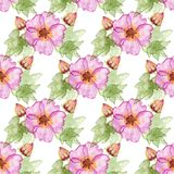Seamless pattern with hibiscus flowers. Seamless pattern with hibiscus flowers and buds Stock Photography