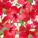 Seamless Hibiscus pattern royalty free stock images
