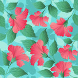 Seamless pattern with hibiscus flowers Stock Photography