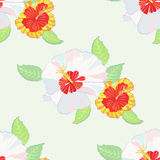 Seamless pattern with hibiscus-05 Stock Photos