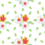 Seamless pattern with hibiscus Royalty Free Stock Photos