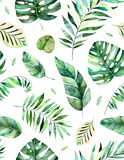 Seamless pattern with high quality hand painted watercolor tropical leaves. Tropical forest collection.,Perfect for your project,wedding,greeting card,photos Royalty Free Stock Image