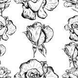 Seamless pattern of highly detailed hand drawn roses isolated on white background. Vector. Seamless pattern of highly detailed hand drawn roses isolated on white Royalty Free Stock Images