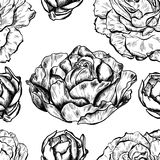 Seamless pattern of highly detailed hand drawn roses isolated on white background. Vector. Seamless pattern of highly detailed hand drawn roses isolated on white Royalty Free Stock Photo