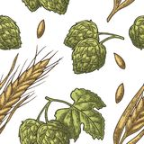 Seamless pattern from hop with leaf and Ear of barley. Royalty Free Stock Photos