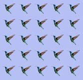 Seamless pattern of hummingbird royalty free stock photography