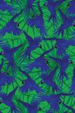 Seamless pattern with hyacinth macaws flying. Hand Stock Photography