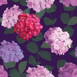 Seamless pattern of hydrangea flowers with purple background. Royalty Free Stock Photos