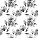 Seamless pattern with Hydrangea and Tulips flowers Stock Photography
