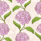 Seamless pattern with hydrangea Stock Image