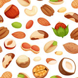 Seamless pattern with illustrations of nuts vector. Royalty Free Stock Image