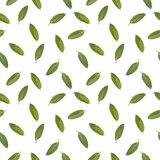 Seamless pattern with the image of mint leaves royalty free stock images