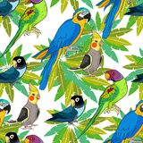 Seamless pattern Indian ringed parrot ozherelovy, Masked    Royalty Free Stock Photos