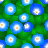 Seamless pattern with ipomoea flowers Royalty Free Stock Photography