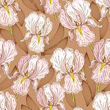 Seamless pattern with iris Stock Photography