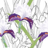 Seamless pattern with iris and  black and white-02 Royalty Free Stock Images