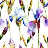 Seamless pattern with Iris flowers Royalty Free Stock Photo
