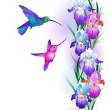 Seamless pattern with Iris and hummingbirds Royalty Free Stock Image