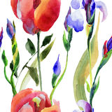 Seamless pattern with Iris and Tulip flower Royalty Free Stock Photos
