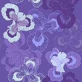 Seamless pattern with irises Royalty Free Stock Image